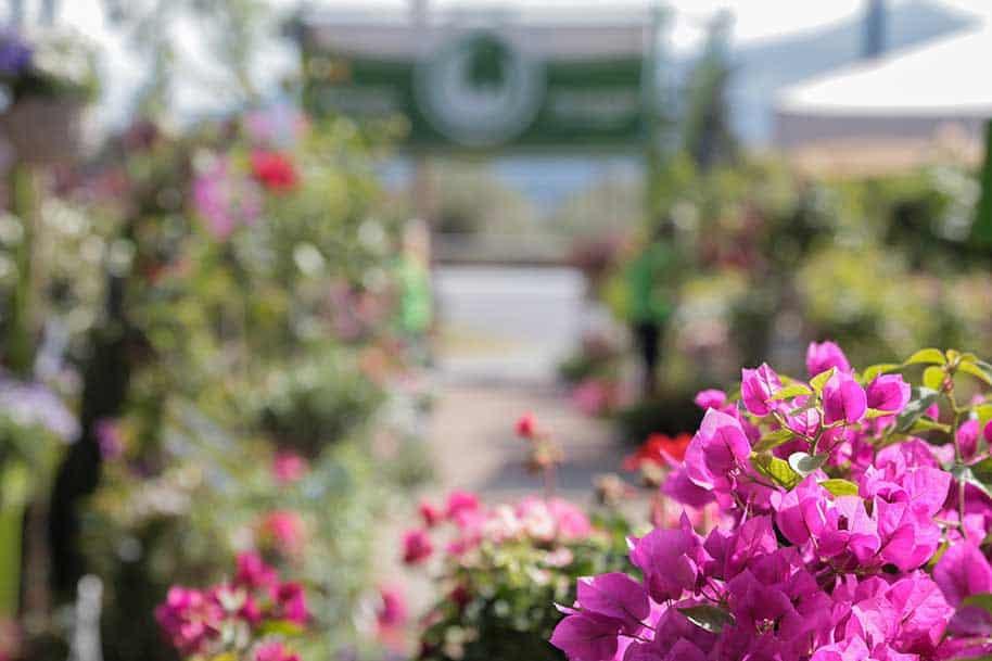φυτώρια Θεσσαλονίκη φυτώρια Βασιλειάδη κατασκευή συντήρηση κήπων αρχιτεκτονική τοπίου garden center vasiliadi garden design garden care