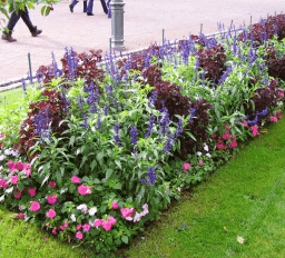 Λίπανση των φυτών