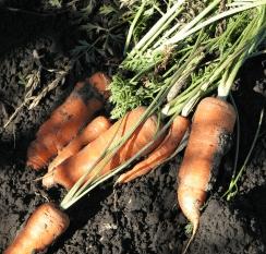 Φθινοπωρινά λαχανικά
