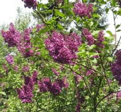 Το φυτό του μήνα